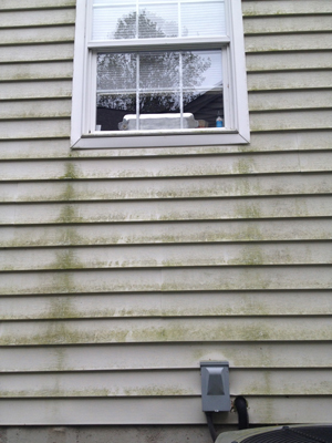 A gross portion of siding beneath a window