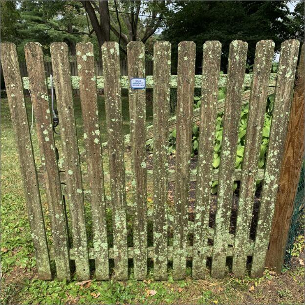 Lichen-covered wooden fence before powerwash