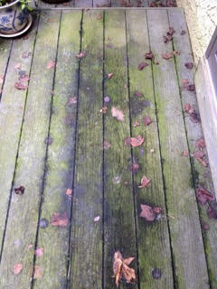 A horrible deck covered in moss, leaves, dirt