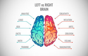 left brain vs right brain infographic: displaying whether digital marketing is an art or science