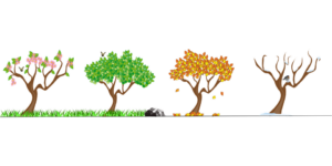 an infographic showing 4 trees in different seasons: winter, spring, summer, and fall