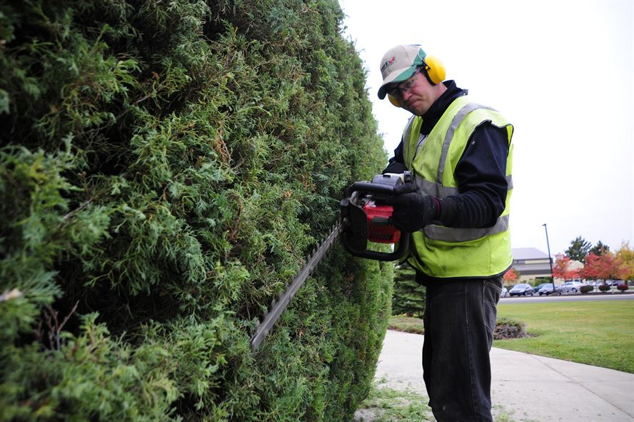 Lawn Maintenance worker using a power tool to trim a hedge.