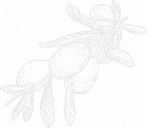 A grey on white illustration of olives on the branch.