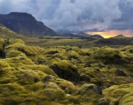 Surreal landscape with wooly moss of Iceland. Racomitrium lanuginosum, or gray moss as the plant is known locally, is a predominant part of the wild vegetation that thrives on the young lava fields in southern parts of Iceland. This robust plant is usually the first pioneer to colonize newly run lava, patiently covering the sharp-edged black and lifeless stone with soft gray-green carpets through the first decades while slowly, but surely, binding a layer of soil in preparation for more demanding settlers such as grasses and ferns.
