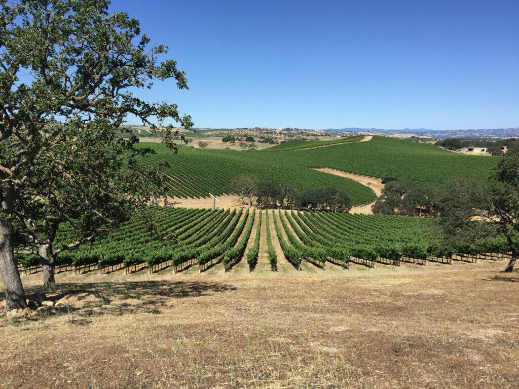 the Riboli family winery vineyards